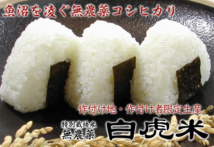 無農薬 白虎米 会津産コシヒカリ