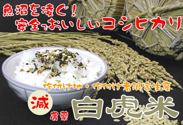 減農薬 白虎米 会津産コシヒカリ